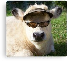 cow with sunglasses Canvas Print