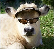 cow with sunglasses Photographic Print