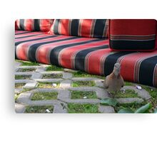 Pigeon next to mattress in the park. Canvas Print