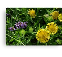Yellow flowers, natural background. Canvas Print