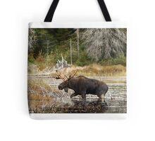 Bull moose - Algonquin Park Tote Bag