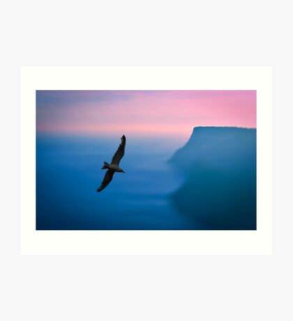 Seagull fly in the sky Art Print