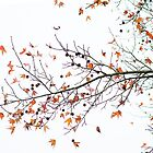 Orange Leaves and Gumballs by Susan Werby