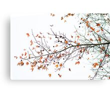Orange Leaves and Gumballs Canvas Print