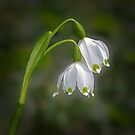 Spring Snowflake - March 2016 by cclaude