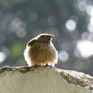 Babbling Angrybird by Amrita Neelakantan