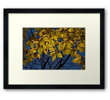 The Gold Canopy Framed Print