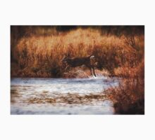 White Tail Deer jumping into the Creek - Parc National Mont Tremblant One Piece - Short Sleeve