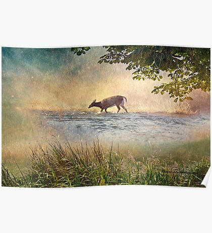 White Tail Deer Touting the Water - Parc National Mont Tremblant Poster