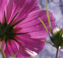 Cosmea Blume Sticker
