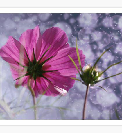 Cosmea Blume Sticker
