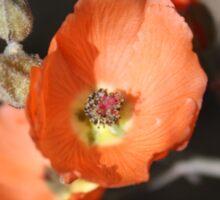 Orange Desert Flower Sticker