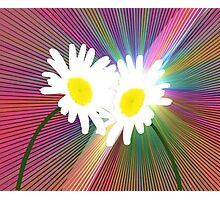 Rainbows and Daisies Photographic Print