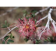 Pink & Red Desert Flower Photographic Print