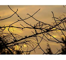 Where a Bird Can Be Photographic Print