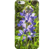 Early Morning Lights Roadside Bluebonnet - View Larger iPhone Case/Skin