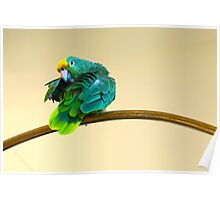 Yellow Crowned Parrot Poster