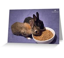 Rabbits Eating Spent Grains Greeting Card