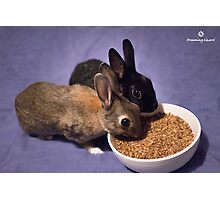 Rabbits Eating Spent Grains Photographic Print