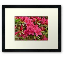 Hot Pink Springtime Framed Print