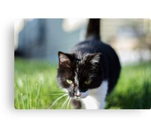 Terry The Cat Canvas Print
