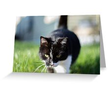 Terry The Cat Greeting Card