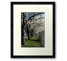 Alley of Trees Framed Print
