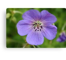 Periwinkle Flower Canvas Print