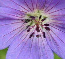Periwinkle Flower Sticker