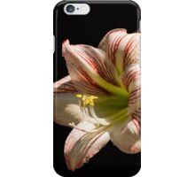 Amaryllis in the dew iPhone Case/Skin