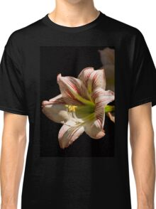 Amaryllis in the dew Classic T-Shirt
