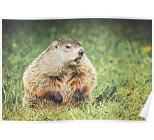 Groundhog in vintage garden setting Poster