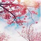 Cherry time by Eliza Sarobhasa
