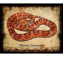 Okeetee Cornsnake Photographic Print