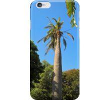 Chilean Wine Palm, Geelong Botanic Gardens. iPhone Case/Skin