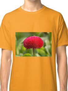 bellis perennis daisy in the garden Classic T-Shirt