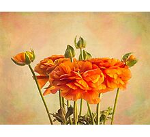 Sunny orange ranunculus blossoms Photographic Print