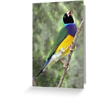 BLACK - HEADED  GOULDIAN FINCH Greeting Card