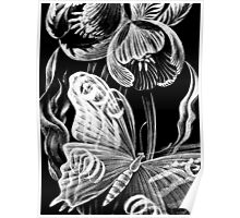 Butterfly & Flower Etchings Poster