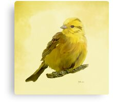 Yellowhammer Metal Print