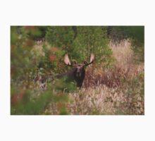 Bull Moose in Algonquin Park, Canada Kids Tee