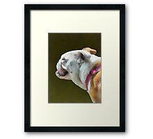 English Bulldog Profile Framed Print