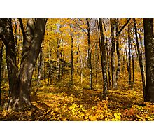 Golden Fall Magic - Sun Dappled Autumn Forest  Photographic Print