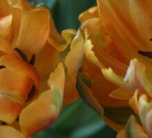 Twin Tulips Sticker