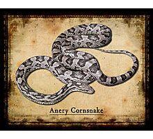 Anery Cornsnake Photographic Print