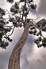 I am a Tree by Jo Nijenhuis