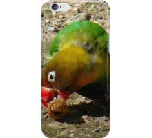 BEAUTIFUL FISCHER BIRD EATING NUT iPhone Case/Skin