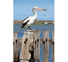 Pelican Viewpoint Photographic Print