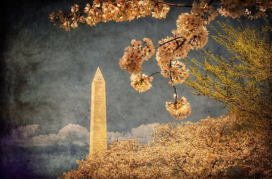 The Washington Monument by Lois  Bryan