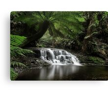 Rainforest Reflections Canvas Print
